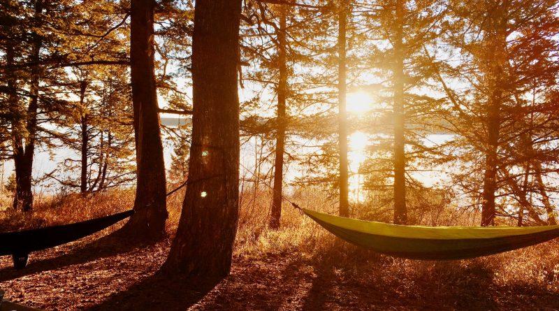 Hangmat ophangen aan boom