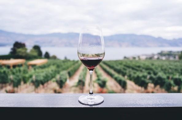 Wijn in het veld